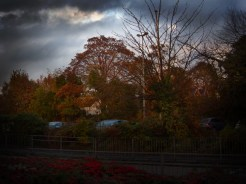 Photo of autumnal trees