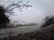 frosty-field-5