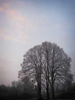 frosty-trees-2