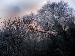 frosty-trees-6