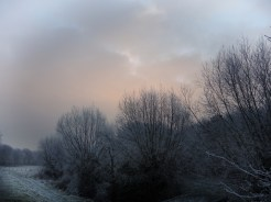 frosty-trees-7