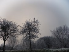 frosty-trees-9