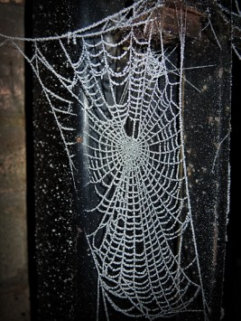 frosty-web-gate-1