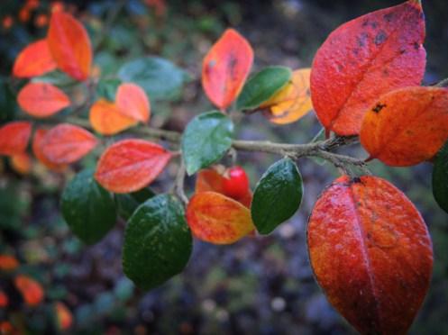 orange-leaves-1
