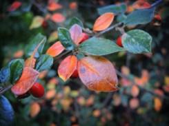 orange-leaves-2