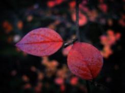 orange-leaves-3