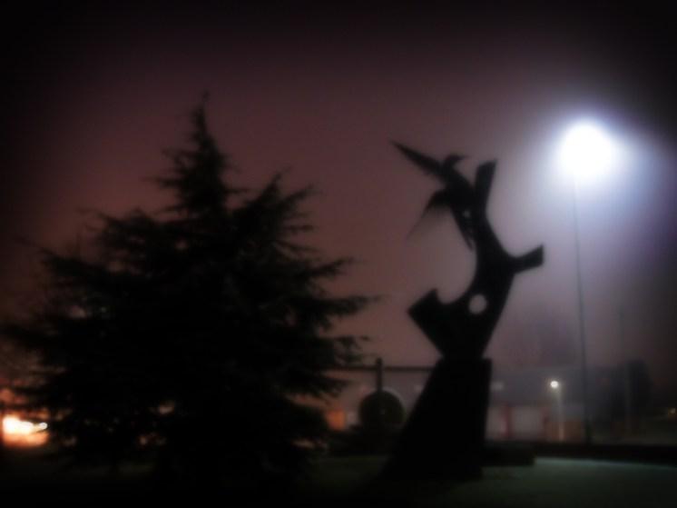 Photo of Bulmer's woodpecker in fog
