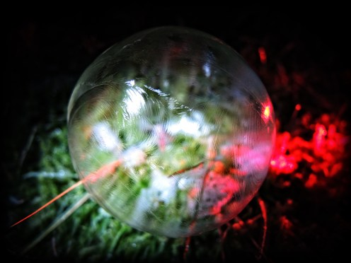 frozen-bubble-5