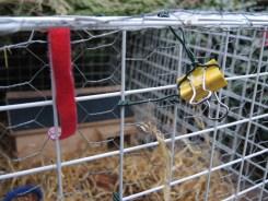 bulldog-clip-200417-b