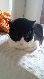 My sweet kitty companion, Lemmy!