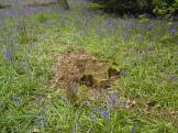 Thinking stump perhaps?