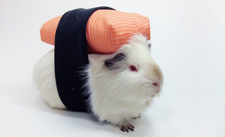 Yes you can switch out the cats for guinea pigs.