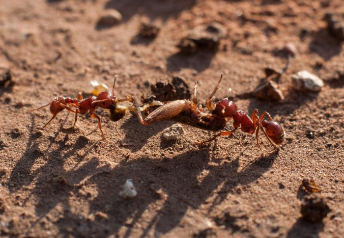 Would you become an ant?