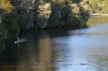 Very jealous of someone paddling an outrigger on Lake Okareka