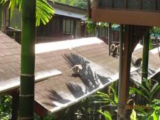 Naughty Monkeys_8
