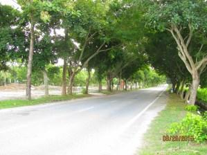 Langkawi Landscape_2