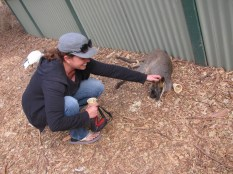 Petting a Wallaby