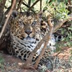 Il vero lusso è un viaggio in Sudafrica a contatto con la natura selvaggia