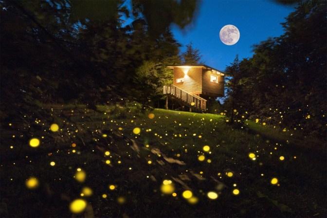 Glamping e foliage: l'autunno nelle case sugli alberi del Parco del Grep  Image of Glamping e foliage: l'autunno nelle case sugli alberi del Parco del Grep