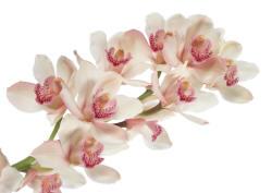 Цветы - растровый клипарт высокого разрешения