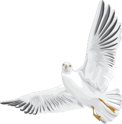 Птицы фото клипарт
