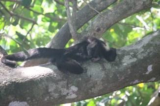 MonkeyMABeach (16)