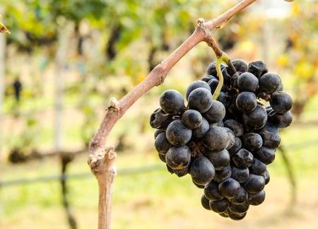 Ramona Valley Wineries