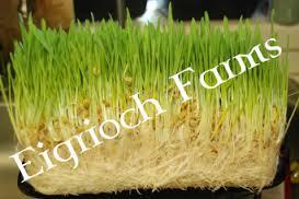 Eigrioch Farms