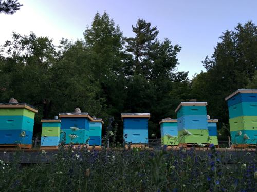 heritage bee co bee hives