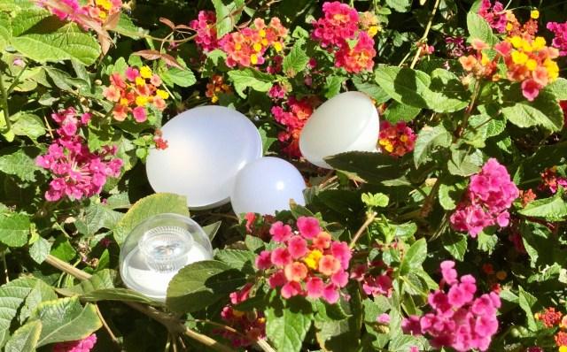 Bulbs in Bloom credit:Matt Herndon