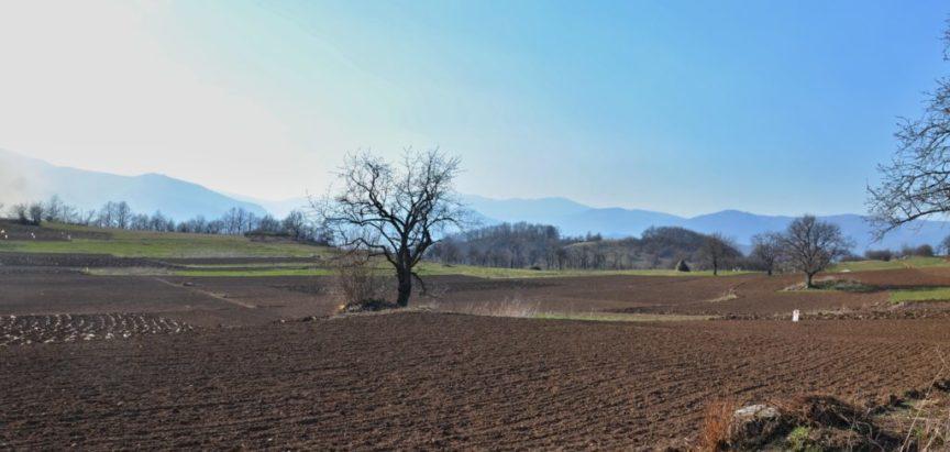 "Foto/video: Plodovi zemlje na ""kraljevskom polju"" ispod Klečke stijene"
