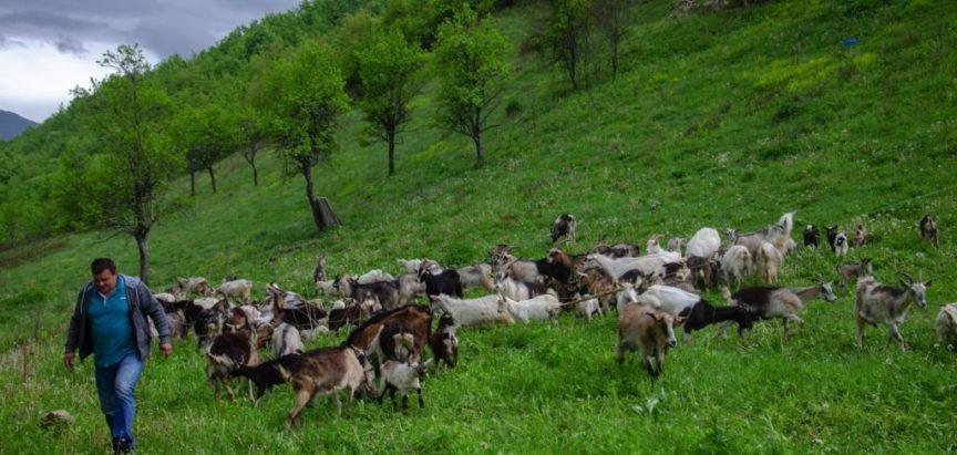 Tadiji Radoš iz mjesta Krančići u općini Prozor-Rama lopovi ukrali 40 koza
