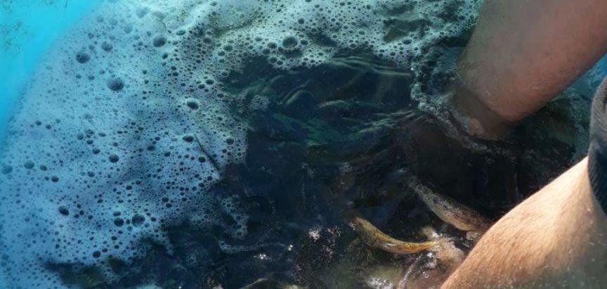 Izvršeno poribljavanje Ramskog jezera