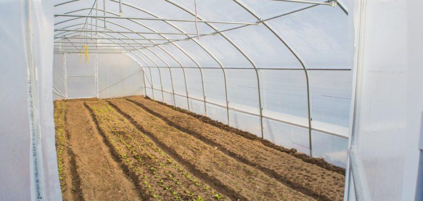 U 20 novih plastenika već se uzgaja povrće