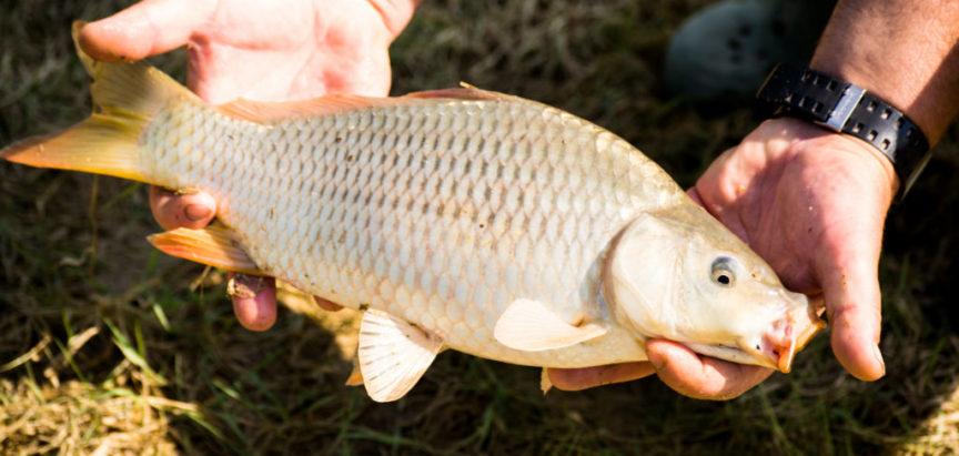 Obavijest za ribolovce o distribuciji dozvola za novu ribolovnu sezonu