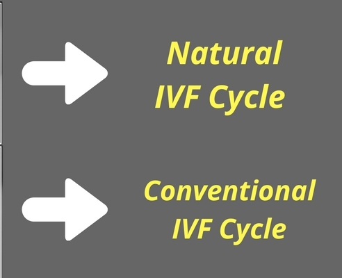 Natural-and-Conventional-IVF-Cycle