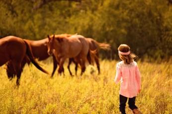 Cooperating horses!