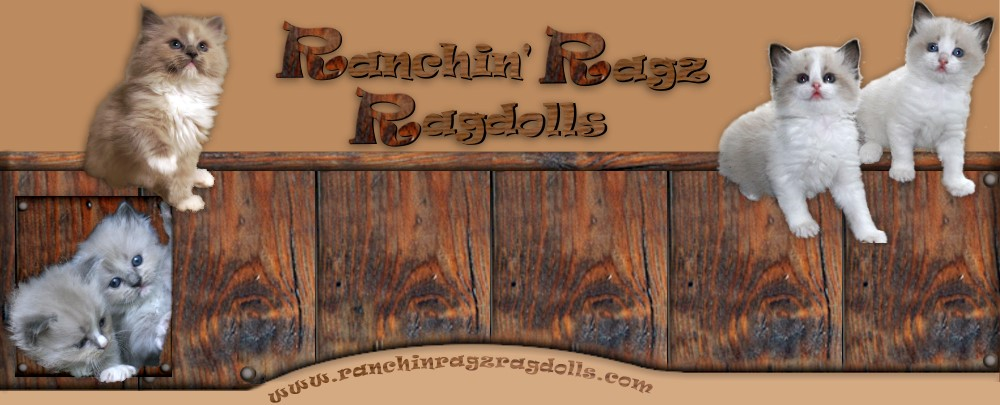 Ranchin' Ragz Ragdolls