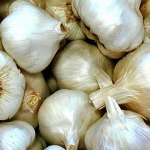 Growing Garlic in the Tropics
