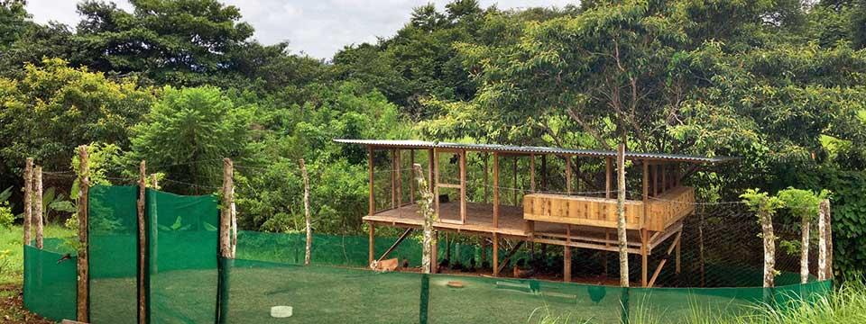 Permaculture Chicken Coop in Costa Rica