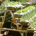 Large recycled bottles used as planter garden