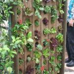 Wall of Salads