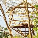 Icosahedron Treehouse Construction