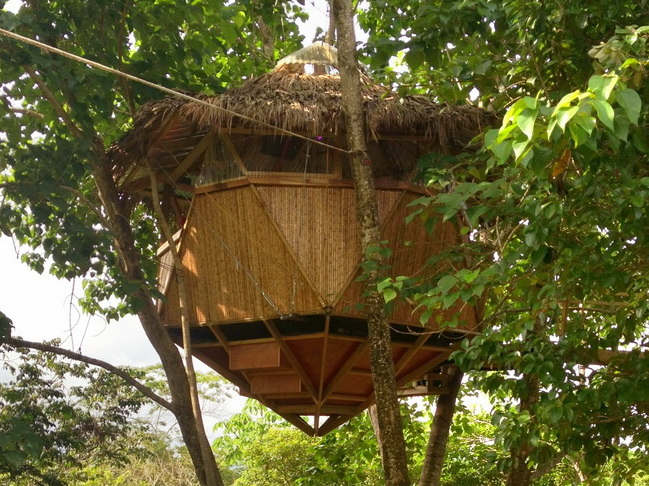 treehouse front 650
