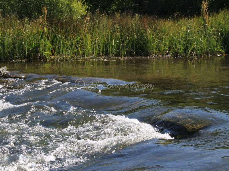 Healthy River and Riparian