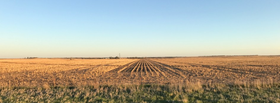 Last uears crops lie in ordered death awaiting new growth this year.