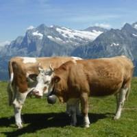 10 najprostszych powodów, dlaczego Szwajcaria nie jest rajem dla pracujących matek