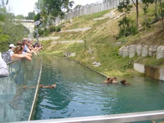 Misie w Bernie Bern capital of Switzerland; Bears in Bern