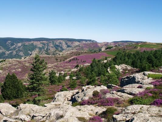 Parc régional haut Languedoc