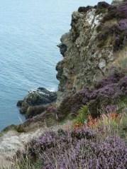 14-Howth la côte et la bruyère1
